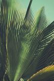 Abstrac  Retro Toned Etxotic Background