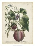 Exotic Weinmann Botanical IV