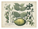 Exotic Weinmann Botanical II