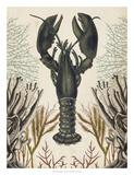 Antiquarian Menagerie - Lobster Giclée par Naomi McCavitt