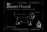 Blueprint Bassett Hound