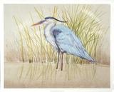 Heron & Reeds II