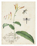 Canna & Dragonflies I