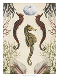Antiquarian Menagerie - Seahorse