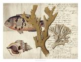 Sealife Journal I