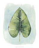 Paradise Palm Leaves III
