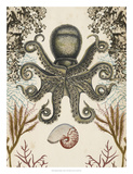 Antiquarian Menagerie - Octopus