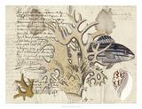 Sealife Journal IV