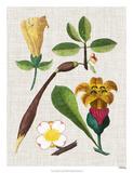 Floral Assemblage V