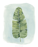 Paradise Palm Leaves IV