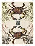 Antiquarian Menagerie - Crab Giclée par Naomi McCavitt
