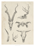 Skull & Antler Study I