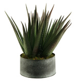 Agave in Rustic Tin Planter
