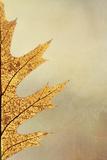 Oak Leaf II