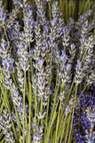 Cut Lavender I