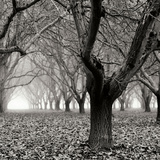 Tree Grove BW Sq I