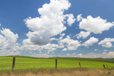 Palouse Farm I