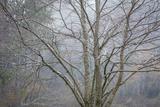 Foggy Winter I