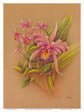 Pink Cattleya Orchid Flower - Hale Pua Studio Hawaii
