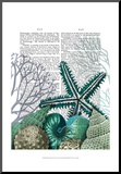 Starfish Under the Sea
