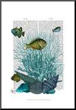 Fish Blue Shells and Corals