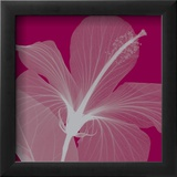 Hibiscus/Silver (small)