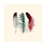 Three Feather Study 1