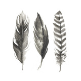 Watercolor Feathers I Reproduction d'art par Grace Popp