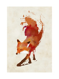 Vulpes Vulpes Reproduction d'art par Robert Farkas
