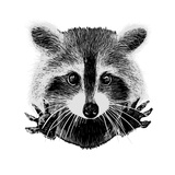 Hand Drawn Raccoon Reproduction d'art par LViktoria