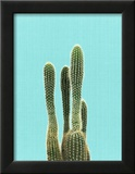Cactus On Blue