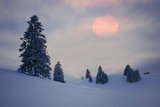 Snow Scenery  Conifers  the Sun  Cloudies  Dusk  Germany  Winter Scenery  Trees  Snow  Frost