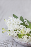 Hyacinths  White  Spring Flowers  Blossoms  Stone Bowl