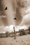Two Raves Flying over the Dunes in Sepia Tones