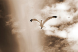 White Sea Gulls Flying over the Dunes in the Sky in Rich Sepia Tones