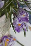Spring Decoration  Crocuses  Medium Close-Up  Detail