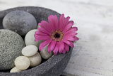 Gerbera Blossom  Shell  Stones