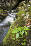 Slovenia  Triglav  National-Park  Rapids  Nature  Plants  Torrent