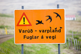 Iceland  Road Sign  Warning 'Low-Flying Birds'
