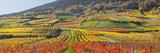 Autumnal Vines  Vineyards  Bathings Near Vienna  Southern Viennese Washbasin  Viennese Wood