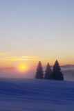 Germany  Baden-Wurttemberg  South Black Forest  Feldberg (Mountain)  Winter Scenery  Sunrise