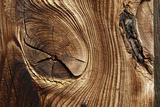Wood  Branch  Pattern