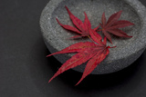 Still Life  Maple Leaves  Red  Shell  Gray  Black  Still Life
