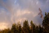USA  Yellowstone National Park  Cloud