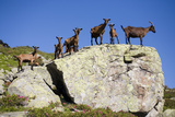 Austria  Styria  Schladminger Tauern  Rocks  Mountain-Goats  Nature