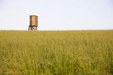 Raised Hide  Meadow  Unmowed