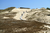 Lithuania  Curonian Spit  Perwalka  Drifting Sand Dune