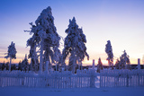 Snowy Spruces on the Fichtelberg  Sunrise