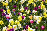Flowerbed with Spring Flowers