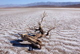 USA  Death Valley National Park  Salt Creek